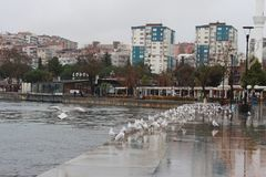 Sea and gulls. In the Çanakkale Strait in December Royalty Free Stock Photo
