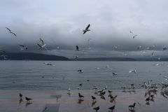 Sea and gulls stock photography