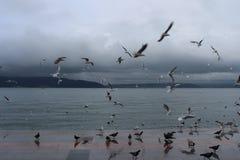 Sea and gulls royalty free stock photos