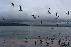 Sea and gulls. In the Çanakkale Strait in December Stock Photography