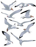 Sea_gulls Stock Images