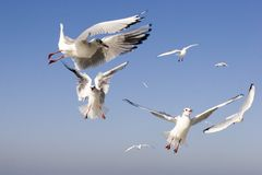 Sea-gulls Stock Photo