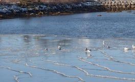 Sea gulls on atlantic ocean,Nova Scotia Stock Photos