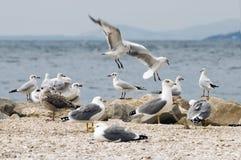 Sea gulls on beach. Seagulls sitting on the beach Stock Photo