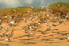 Sea gulls on the beach Royalty Free Stock Images