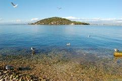 Sea gulls on beach. Seagulls  resting on beach behind the small island Osljak, Adriatic sea, Croatia Royalty Free Stock Images