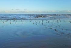 Sea Gulls on the Beach Stock Photo