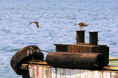Sea gulls on bollards Royalty Free Stock Photos