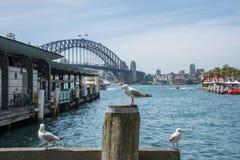 Sea Gulls at the Circular Quay. SYDNEY,NSW,AUSTRALIA-NOVEMBER 20,2016:  Sea Gulls at the Circular Quay waterfront with Sydney Harbour Bridge view, nautical Stock Photos