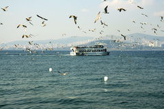 Sea gulls and the city. Istanbul,sea gulls, turkey, prince islands Stock Images