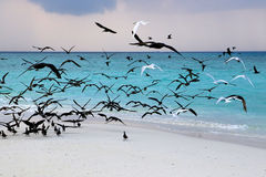 Sea gulls on coast of a sandbank at Maldives Royalty Free Stock Photos