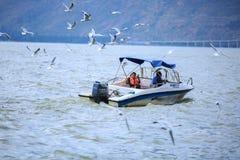 Sea gulls on the Dian Lake in Yunnan, China stock image