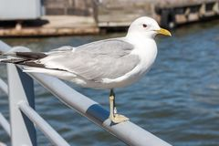 Sea gulls on the embankment of the South Harbour of Helsinki stock photos