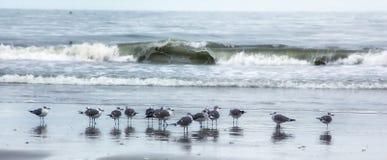 Sea Gulls. A flock of sea gulls on a beach Stock Images