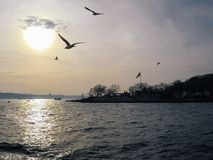 Sea gulls fly behind a ship in sunset sky stock images