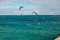 Sea Gulls Flying Away Stock Image