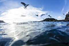 Sea Gulls Royalty Free Stock Photography