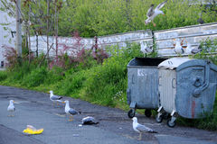 Sea-gulls and Garbage Containers Stock Photos