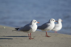 Sea-gulls group Stock Photos