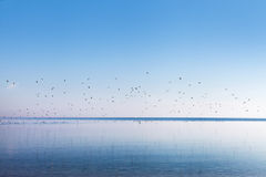 Sea gulls at gulf of Riga, Baltic sea. Stock Images