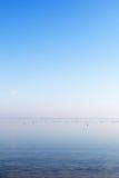 Sea gulls at gulf of Riga, Baltic sea. Stock Photography
