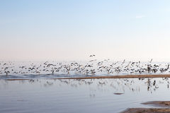 Sea gulls at gulf of Riga, Baltic sea. Royalty Free Stock Photo