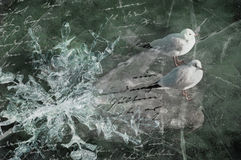 Sea-gulls, ice floe and poem Royalty Free Stock Image