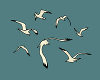 Sea gulls illustration Stock Photography