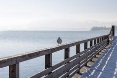 Sea gulls at lake Traunsee in Gmunden, Salzkammergut, Austria,eu Royalty Free Stock Photo