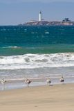 Sea-gulls and a lighthouse Royalty Free Stock Photography