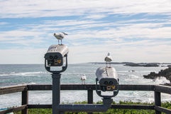 Sea Gulls at the Lookout. Sea Gulls at a Penguin Island lookout the Indian Ocean seascape under a cloudy sky in Rockingham, Western Australia Royalty Free Stock Images