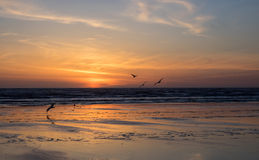 Sea gulls over ocean at sunset Royalty Free Stock Photos