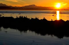 Gulls at dawn. Sea gulls perched on a rock jetty on a January morning in White Rock, BC, Canada Royalty Free Stock Photo