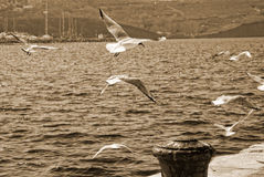 Sea gulls on the pier Royalty Free Stock Photography