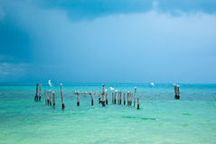 Sea gulls in riviera maya Royalty Free Stock Photo