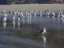 Sea gulls on the sandy beach Royalty Free Stock Photography
