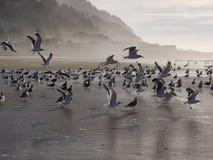 Sea gulls on the sandy beach Stock Photo
