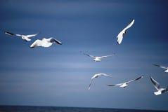 Sea-gulls at the sea royalty free stock image