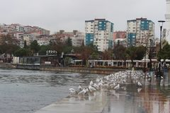 Sea and gulls royalty free stock photography