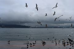 Sea and gulls. In the Çanakkale Strait in December Royalty Free Stock Images