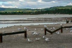 Sea gulls on the shore of Lake Rotorua, North Island, New Zealand stock photo