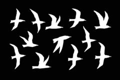 WebSea gulls vector silhouette set. Sea gulls silhouettes vector set. White birds fly on a black background. Chopped straight line silhouette royalty free illustration