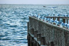 Sea gulls sit on the pier against the background of the Atlantic stock images