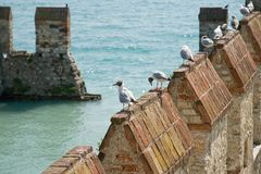 Sea gulls sitting onto castle pinnacles Royalty Free Stock Image