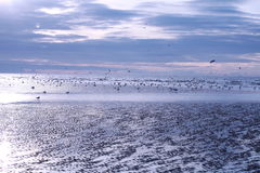 Sea gulls on southsea beach. Winter scene of sea gulls congregating on beach in weak sunlight Royalty Free Stock Photography