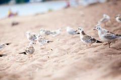 Sea gulls standing on a sandy beach Stock Photo