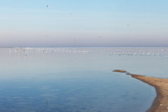 Sea gulls in still Baltic sea. Royalty Free Stock Photos