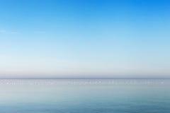 Sea gulls in still Baltic sea. Stock Photography