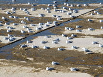 Sea Gulls Sun Bath On Spillway Area Stock Photos