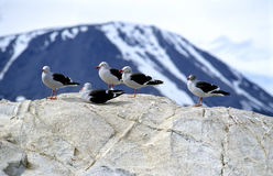 Sea gulls sun bathing Stock Photos